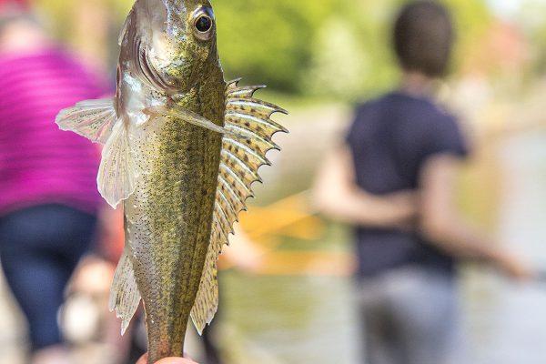 Nationella fiskedagen
