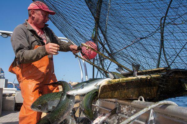 Mikael Lindholm fiskar lax