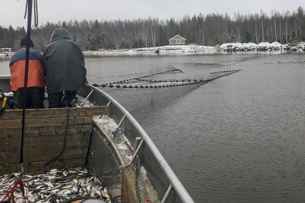 Kuoreen kalastus Pohjanmaalla
