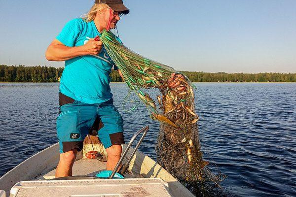 Hämeen kalatalouskeskuksen kalatalousneuvoja koeverkkokalastamassa veneellä järvellä.