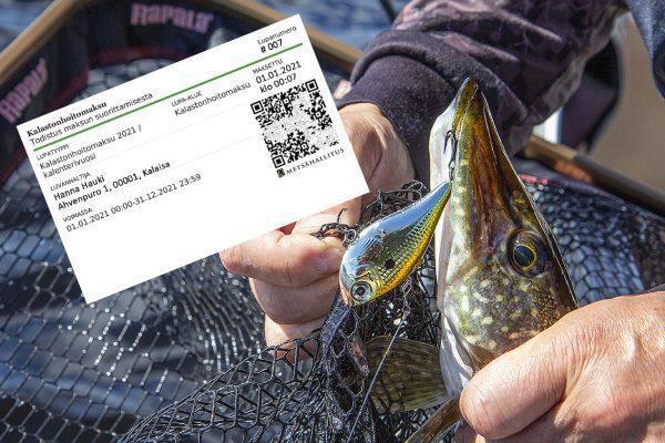 Kalastus on nyt suosittua. Kalastonhoitomaksu ja uistimeen tarttunut hauki.