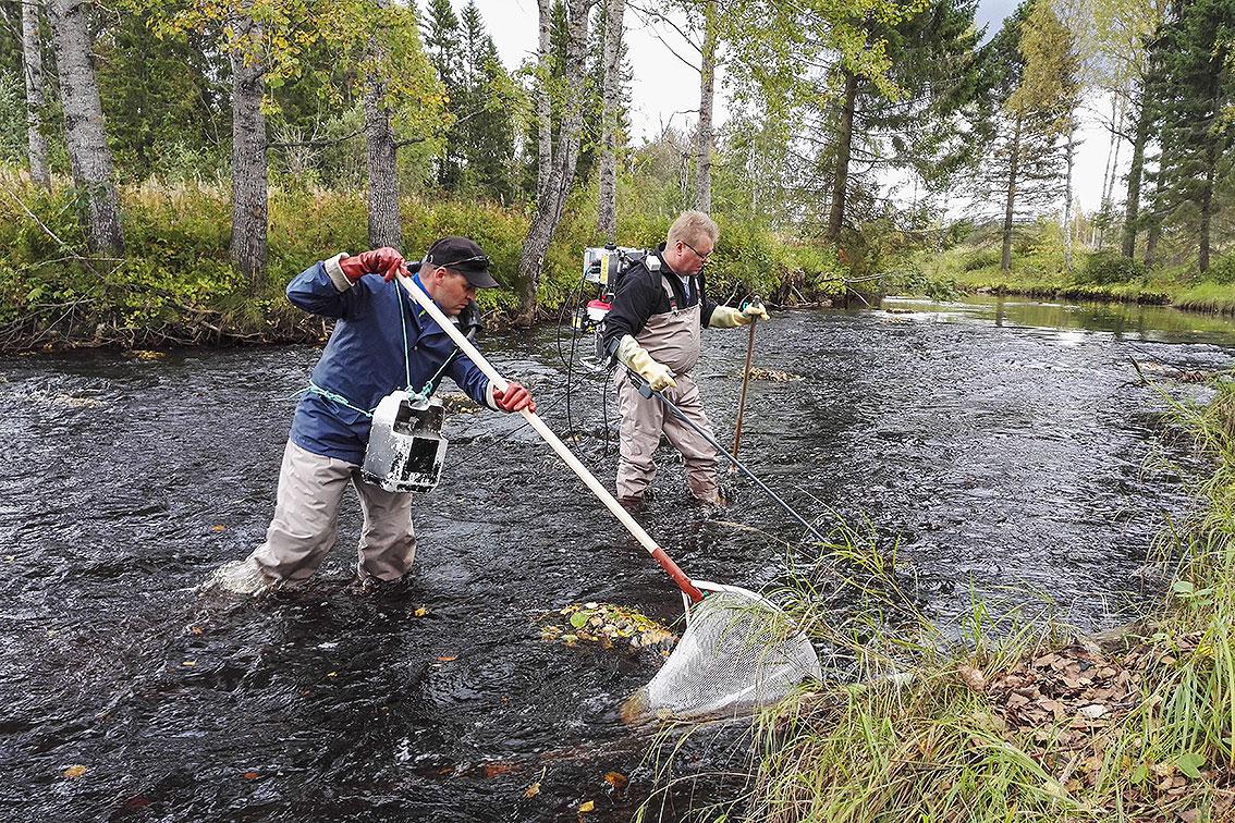 oulun-kalatalouskeskus-sähkökoekalastusta-joella