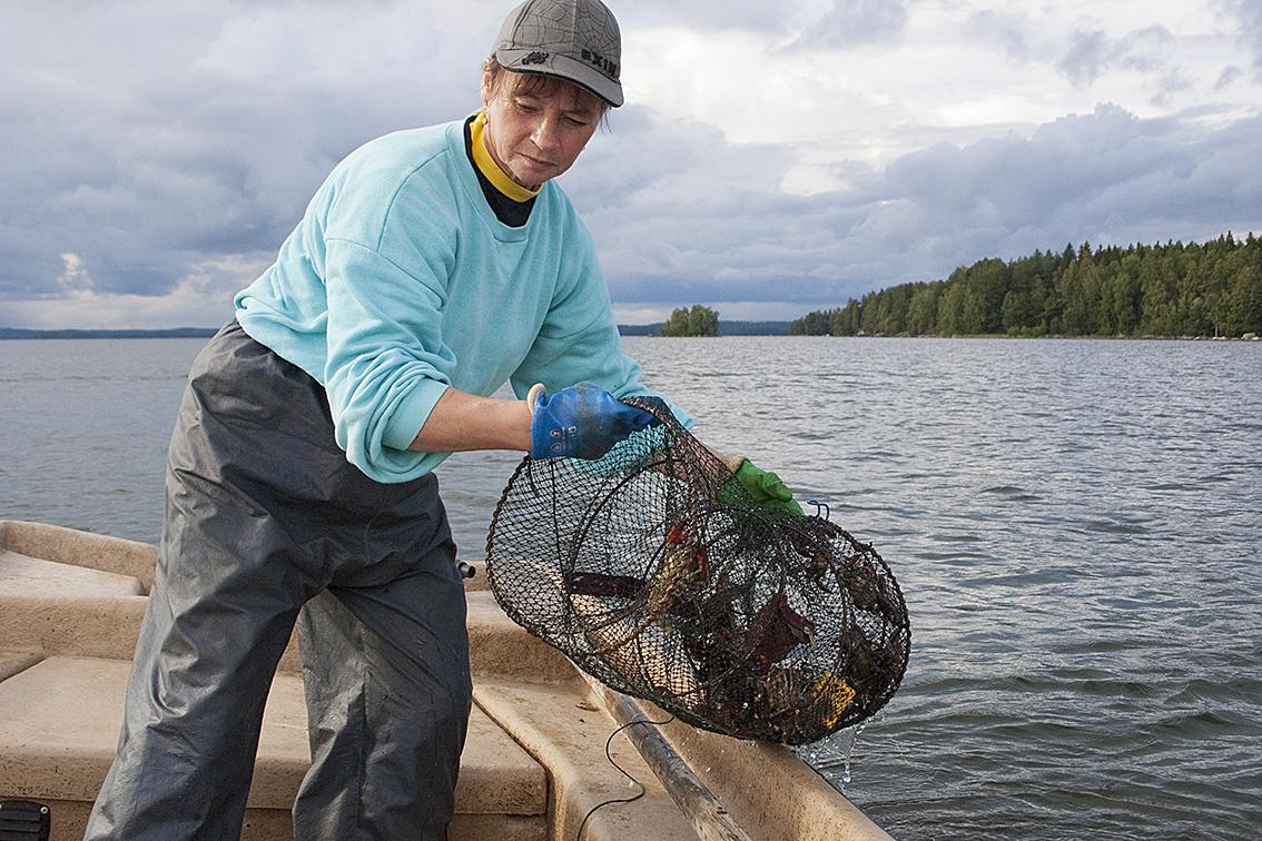 Kräftfiskesäsongen inleds i juli